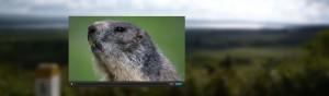 Un petit film sur les marmottes