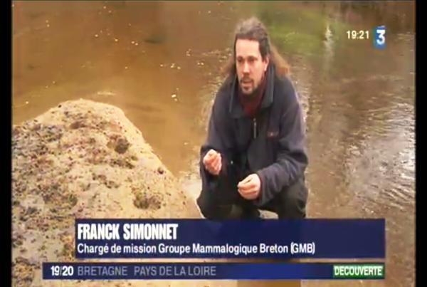 Rivières : La Loutre fait son retour en Bretagne