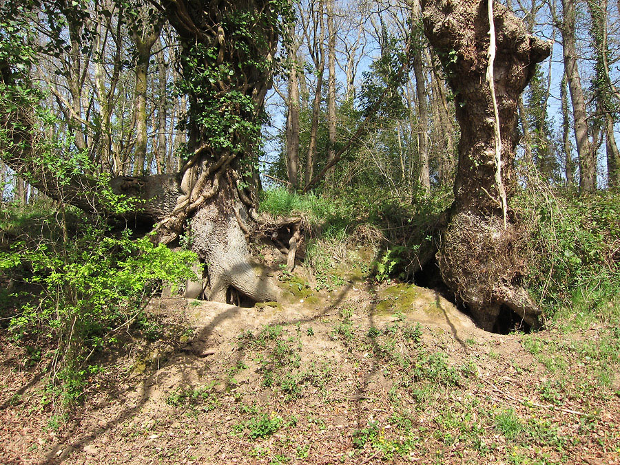 Terriers sur un vallon à la Chapelle sur Erdre (44). Sérot J.F.