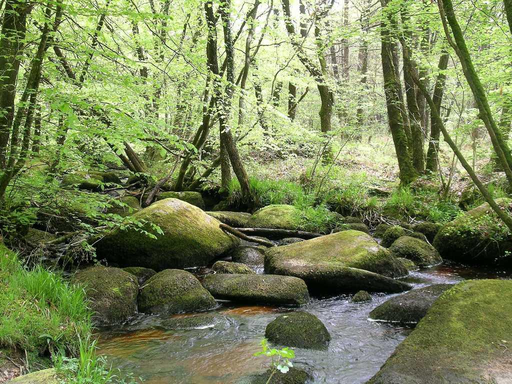 ruisseau-du-corong-mai-06-fs